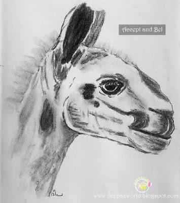 Donkey-Fonda'sAnimalPhotoChallenge-HuesnShades