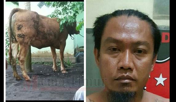 Bunoto DPO saat diamankan di Polres Lumajang