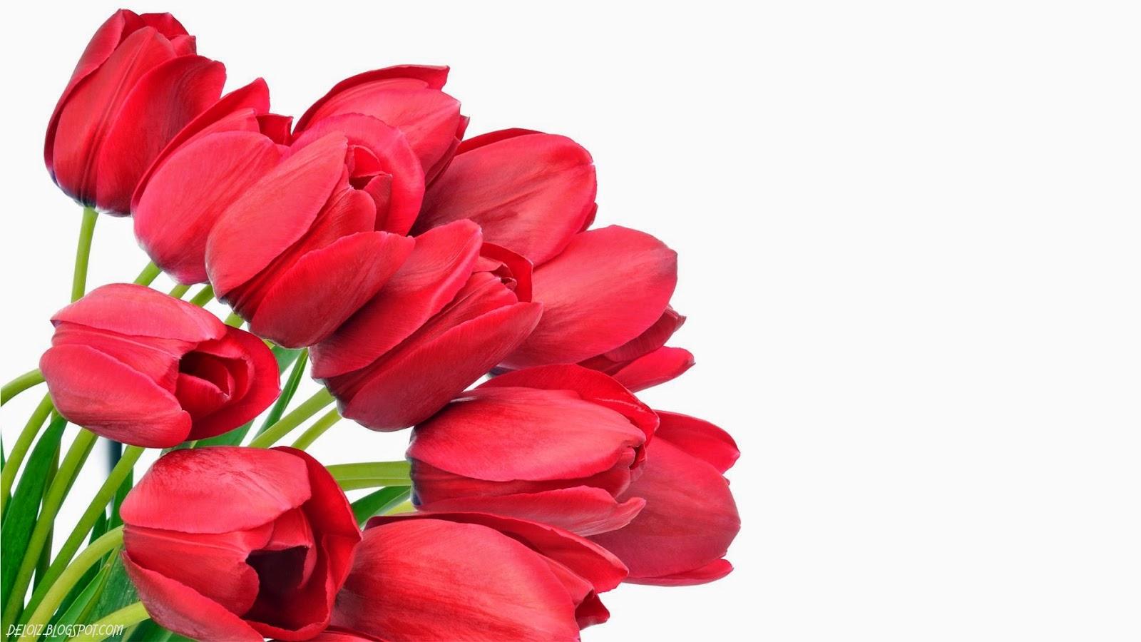 50 Gambar Bunga Cantik Dan Indah Sealkazz Blog