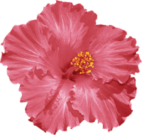 Hibisco vermelho png