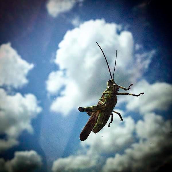 Cuando pasamos un lugar donde están fumigando, un chapulín se posa en el cristal delantero. Me pregunto si el insecto, huyendo de los venenos, habra decidido venirse con nosotros en busca de un nuevo hogar.