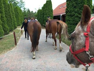 Kavioliitossa 30 vuotta, Riitta Reissaa, Horsexplore, Unkari