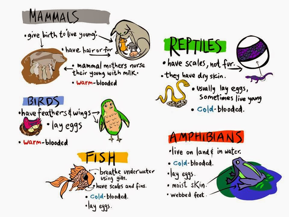 Education Made Fun Science English Yr 2 Animals