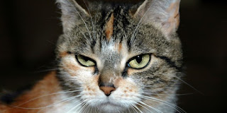 Kucing Hewan Pendendam