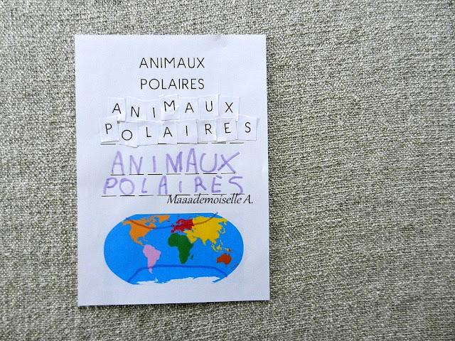 || Nos activités autour des animaux polaires