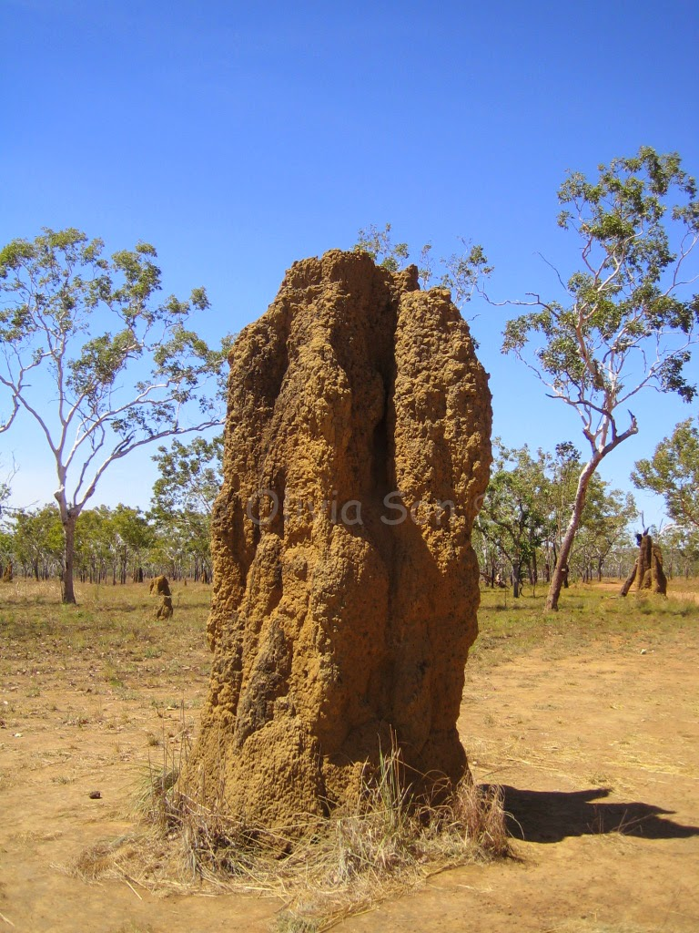 Termite Mount, Kakadu National Park, Northern Territory, Australie