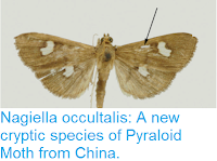 http://sciencythoughts.blogspot.co.uk/2017/07/nagiella-occultalis-new-cryptic-species.html