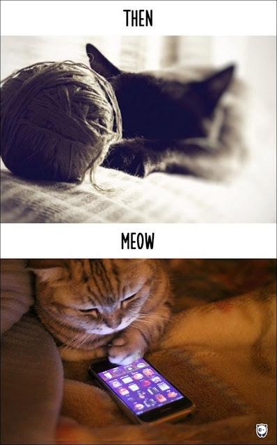 Cuộc sống của các bé mèo khi công nghệ phát triển