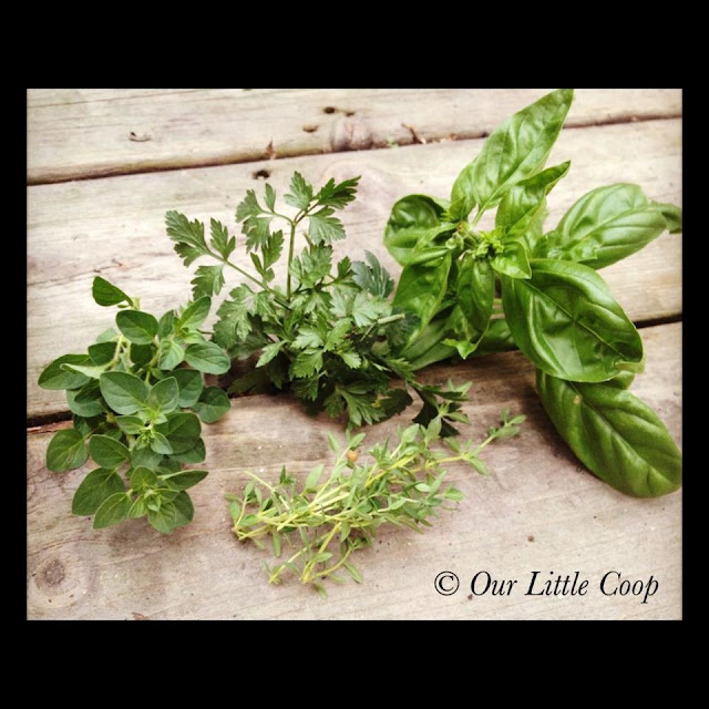 fresh herbs parsley basil oregano thyme