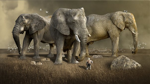 Difference Between African And Asian Elephant
