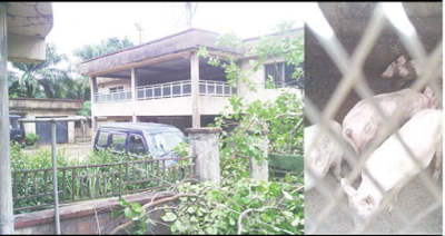 See Where Billionaire Kidnapper, Evan's Father Sell Pigs And The Old House He Lives In