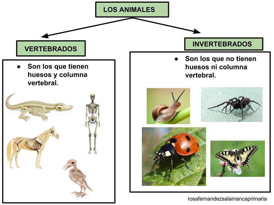 Dibujos Para Colorear De Animales Invertebrados Y Vertebrados: Dibujos Para Colorear De Animales Vertebrados E