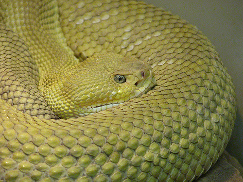 Ever Seen: Most venomous and the deadliest snakes in the ...