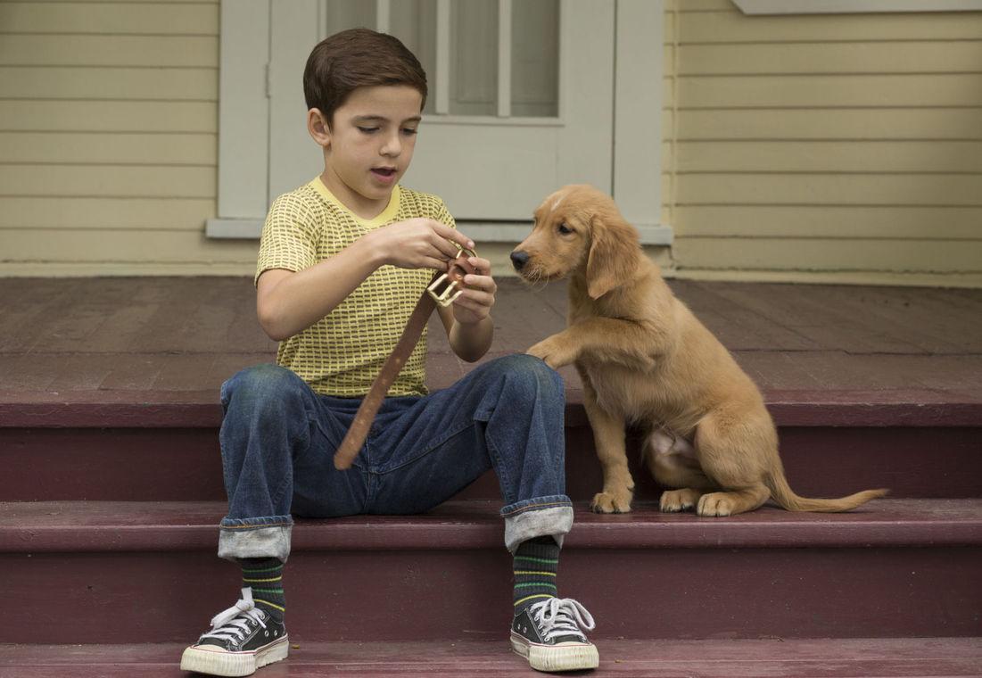 A Dog S Purpose Point Cinema