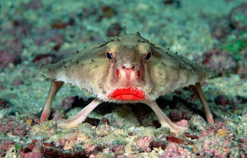 Ikan Pakai Lipstik