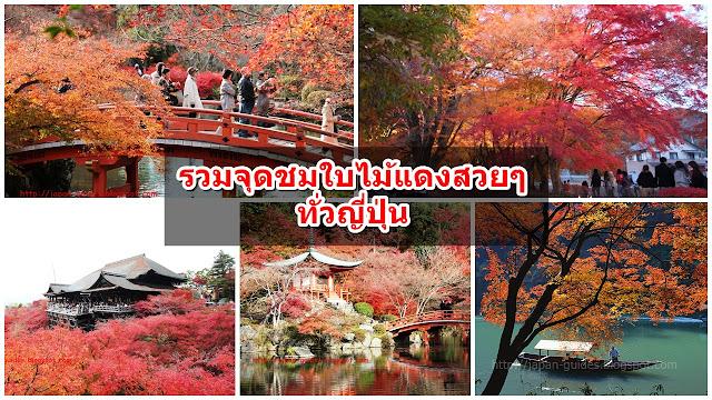 Autumn Foliage Spot in Japan