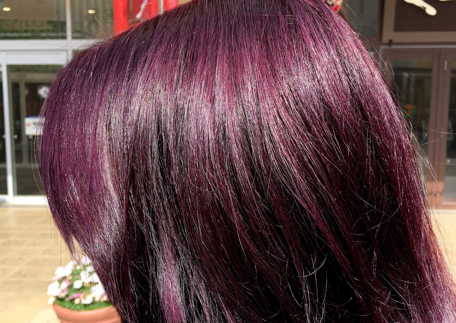darkest plum brown hair color wwwpixsharkcom images