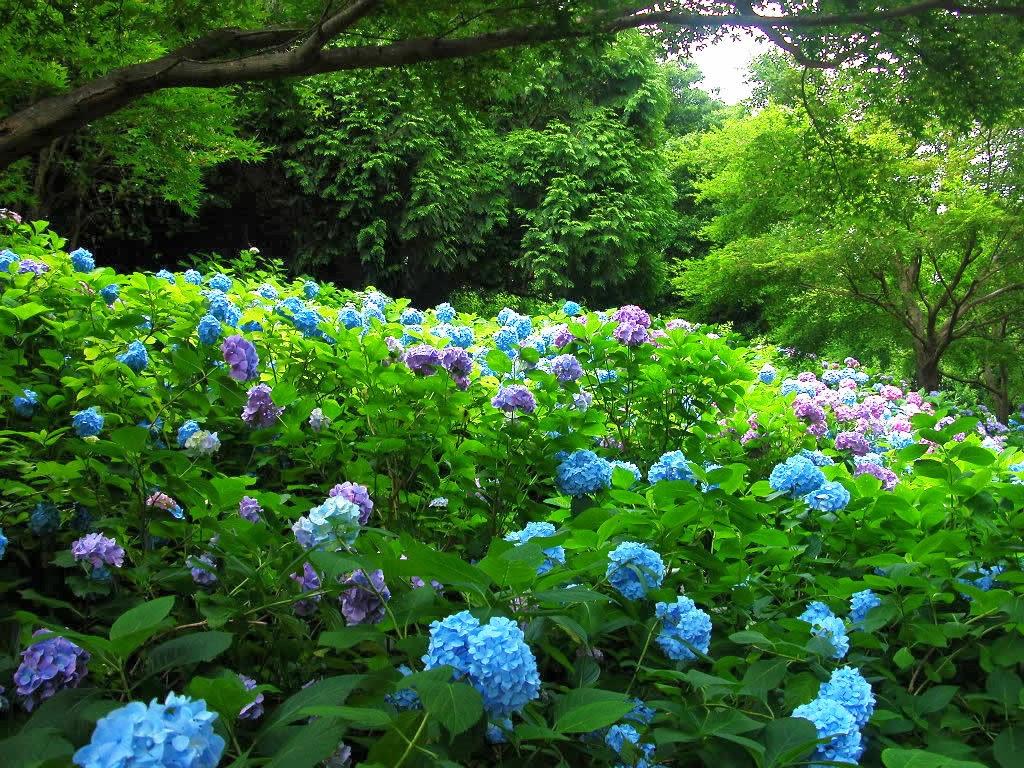 Beautiful Garden Flowers Wallpapers