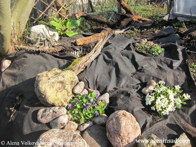 фиалка, примула Комарова, камни, геотекстиль, коряга, рутарий, бадан, спанбонд, лутрасил, агроволокно, агротекс, нетканый материал, против сорняков, использование в огороде