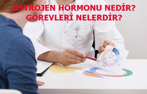 ÖSTROJEN HORMONU NEDİR? GÖREVLERİ NELERDİR?