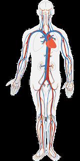 the body's organs
