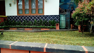Jual Rumput Gajah Mini Varigata,Rumput Gajah Mini Varigata Murah,Rumput Taman Untuk Rumah Minimalis