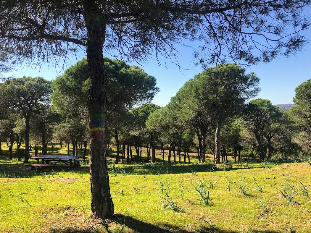 1505b9917 Ya se acerca la primavera y sería un pecado no disfrutar de un día de campo  en esos parajes naturales tan idílicos que tiene el Algarve.