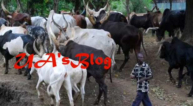 Establish cattle ranches not colonies, experts advise FG