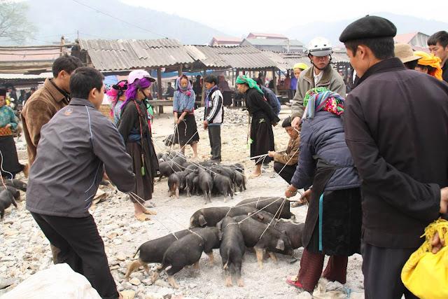 Có nhiều cách chế biến lợn cắp nách, trong đó món ngon và nổi tiếng nhất là lòng dồi và thịt bụng hấp cách thủy. Khi ăn, thịt lợn chấm với lá nhội giã nhỏ trộn hạt xẻn hoặc hạt dổi, ớt xanh. Hương vị thơm ngon hòa quyện giữa vị hơi chua, chát của hạt dổi, lá chanh gặp với thịt ba chỉ ngọt, mềm.