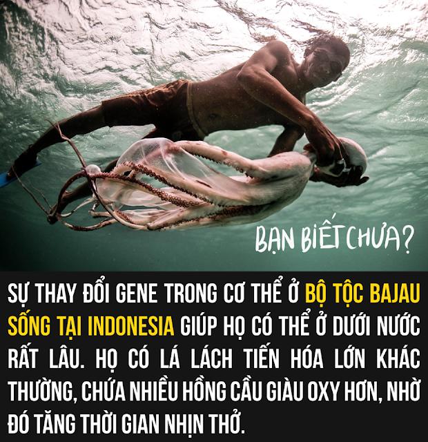 Lý do chính giúp cho bộ tộc Bajau có thể lặn sâu dưới đáy biển