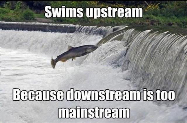 Popular Memes 10