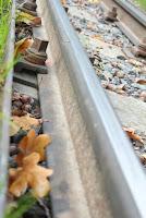 Tod im Kirnitzschtal - Schienen