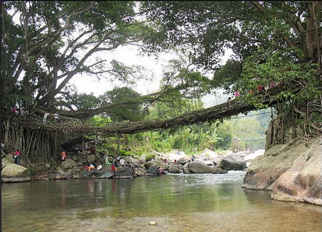 jembatan akar di kecamatan bayang sumatera barat
