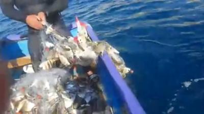 Δεν μπορεί να σηκώσει τα δίχτυα από το βάρος: Ψάρια με το τσουβάλι video...