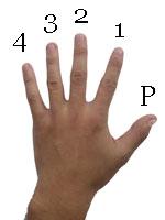 Akordi za gitaru, prikaz položaja prsta na gitari