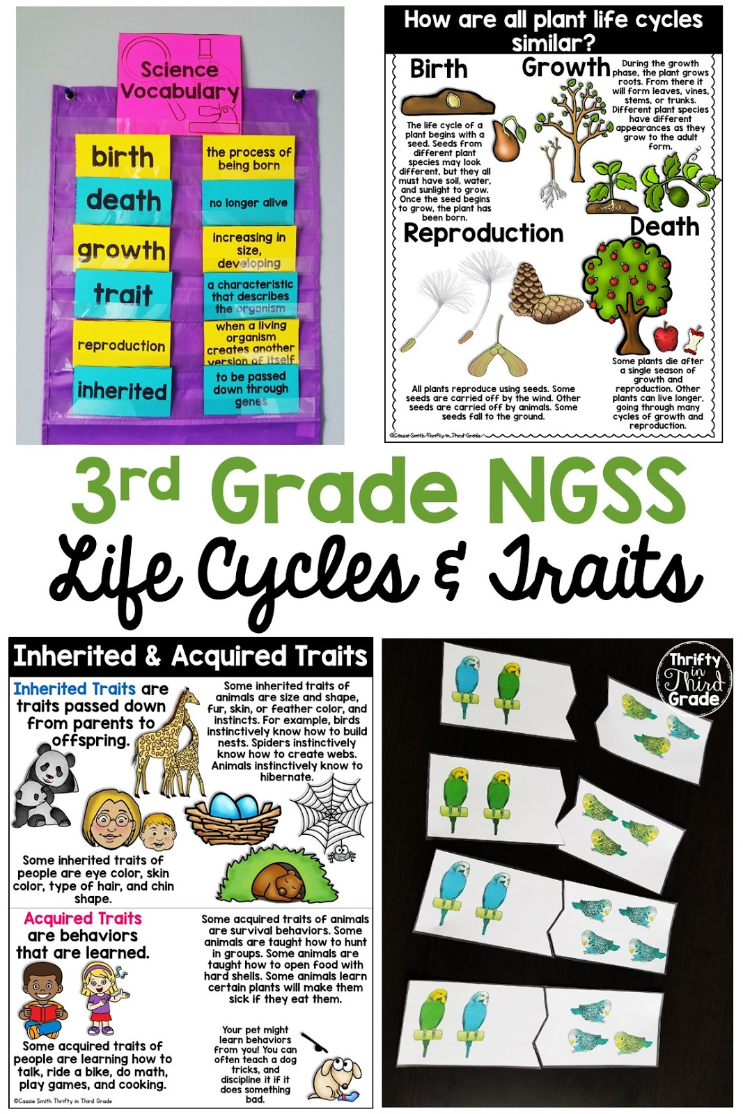 Life Cycles Worksheets Third Grade   Printable Worksheets and Activities  for Teachers [ 1600 x 1067 Pixel ]