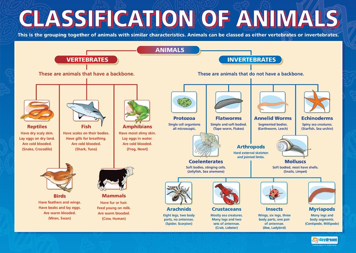 Cockroaches And Ladybugs Animals Animals