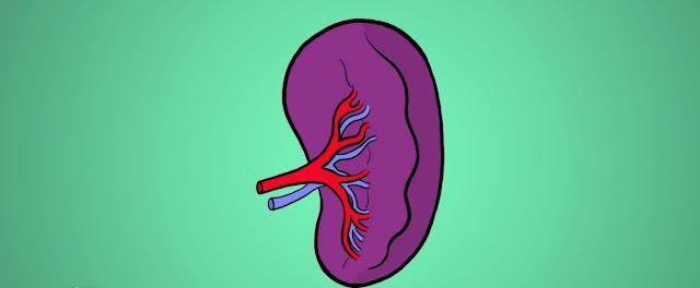 Bazo y organos linfoides
