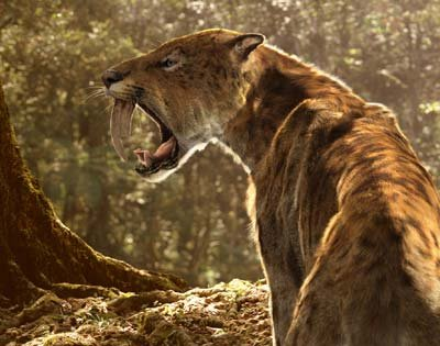 Smilodon (Sabre-toothed Tiger) | Animal Wildlife