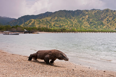 Komodo Open Trip 2017 - Salika Travel