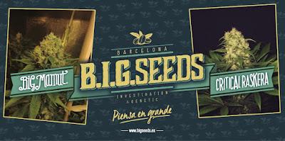 Variedades Bigseeds