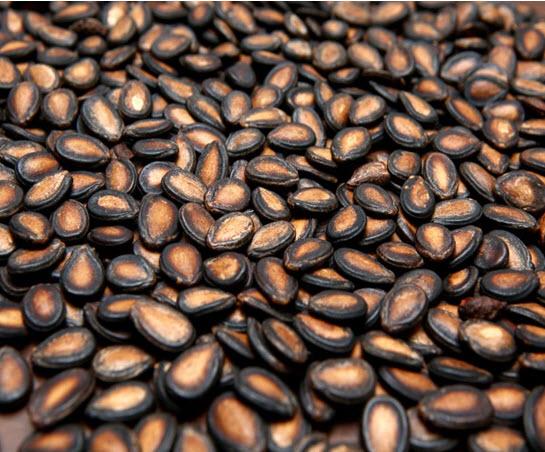Dried seeds of Citrullus lanatus