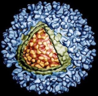 Vírus da Febre do Rio Ross imagem microscopia