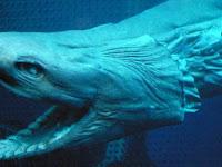 Spesies Ikan Purba 80 Juta Tahun Yang Lalu Ditemukan Berenang Di Portugal