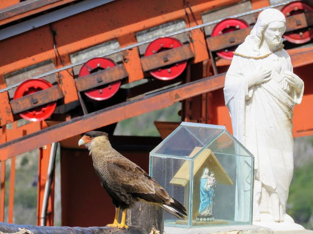 Crested caracara next to a Christian shrine on Cerro Otto in Bariloche Argentina