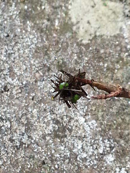 Alien Insects