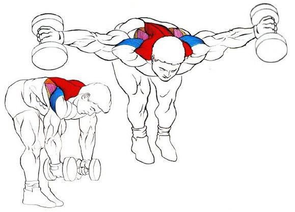 Espalda con mancuerna ejercicio