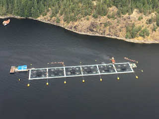 algae bloom, fish farms, British Columbia