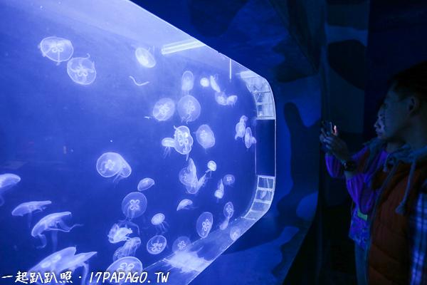 水母好像會發光