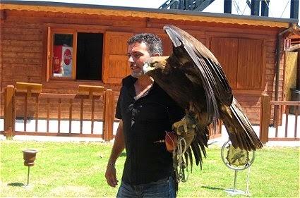 falconeria gradara
